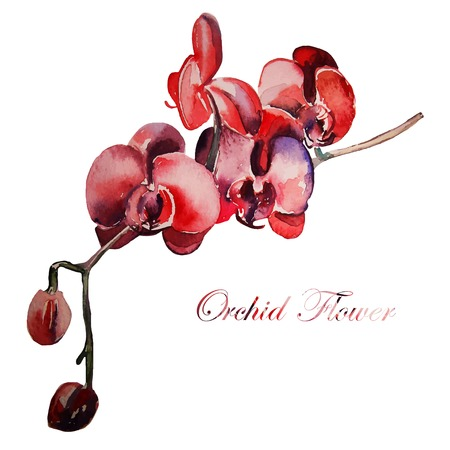 orchid branch: Orchid flower, watercolor, hand drawing.