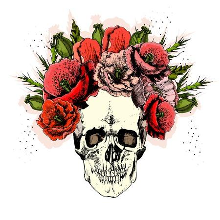 illustration with skull. hand draw. Vector