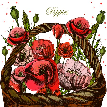 wicker basket: Illustrations with poppies in a wicker basket. Stock Photo
