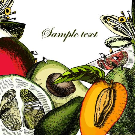 stilllife: Organic Fruits. Still-life of juicy mango, avocado, pomelo. Illustration