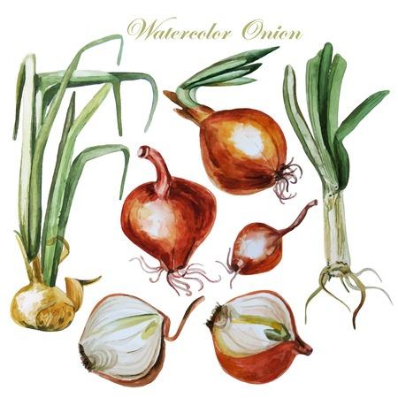 kitchen garden: Set of watercolor onion. Illustrations.