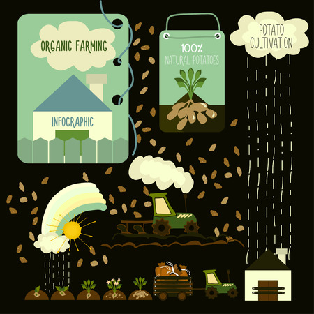 bag of soil: Potato cultivation, infographics. Vector. Illustration