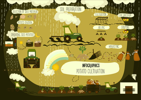 storage data product: Potato cultivation, infographics on a dark background.. Illustrations. Vector. Illustration