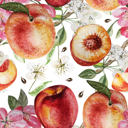 Watercolor Pattern with peaches and flowers. Vector illustration Illustration