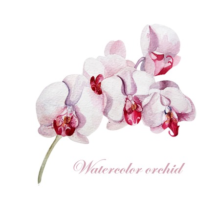 orchid isolated: Watercolor orchid branch on a white background. Vector. Illustration