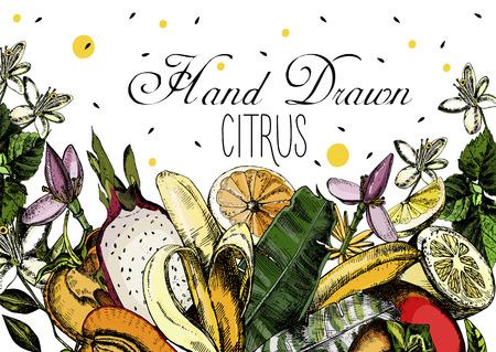 Hand drawing Citrus fruits. Vector illustration