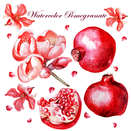 grenadine: Beautiful watercolor set with fruits and flowers of pomegranate. Vector.