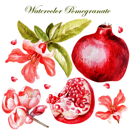 Beautiful watercolor set with fruits and flowers of pomegranate. Vector.