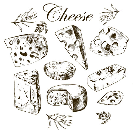 hand drawing set with different cheeses. Vector.