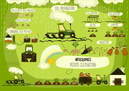 granja caricatura: El cultivo de la patata, la infografía. Vector.