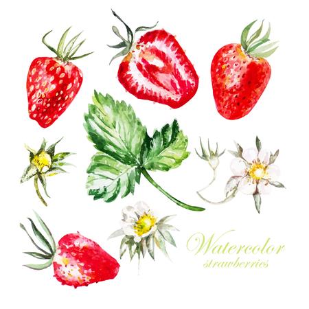 Set avec des baies et des fleurs de fraise. Vecteur. Banque d'images - 48084387