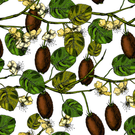 kiwi fruit: Pattern with kiwi fruit and flowers. Vector illustration. Illustration