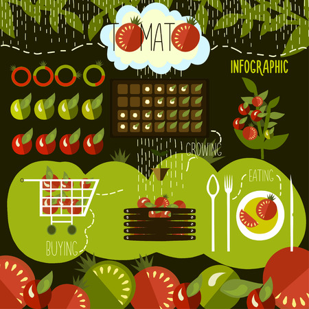 the sprouting: Tomato cultivation, infographics. Vector. Illustration