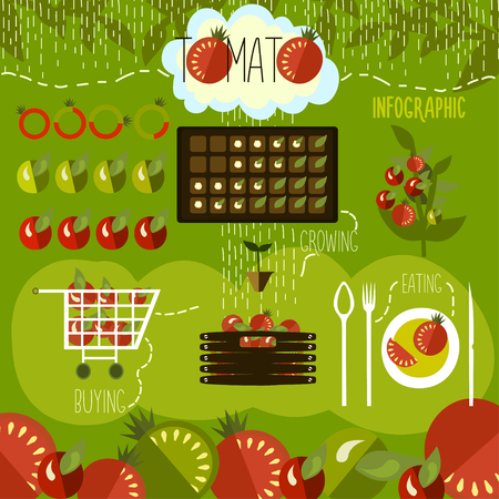 cultivation: Tomato cultivation, infographics.