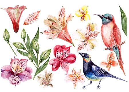 alstroemeria: Setof alstroemeria and birds. Illustration