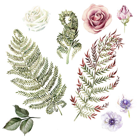 Watercolor set with fern leaves and roses, anemone. Ilustration