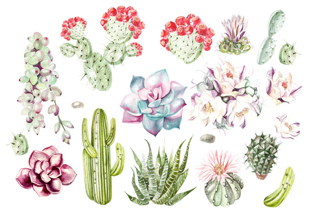 Set with watercolor cacti and succulents. Illustration Banco de Imagens - 89289589