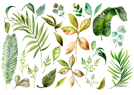 Watercolor set. Wild forest. Leaves. Illustration Stock Photo