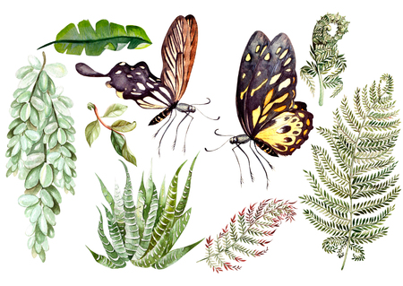 Watercolor set. Wild forest. Leaves. Succulents. Illustration