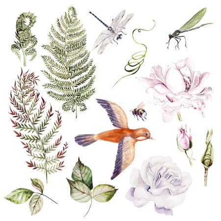 Warercolor set with different leaves and flowers, bird and insects. Illustration Stock Photo