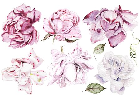 Watercolor Set with pink and purple roses. Illustration