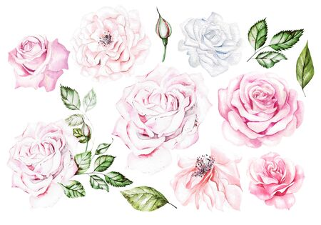 Watercolor Set with pink and white roses. Illustration Фото со стока