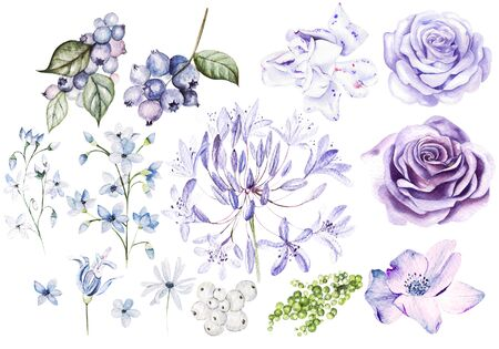 Watercolor Set with violet and purple roses and fllowers, blueberries and berries. Illustration