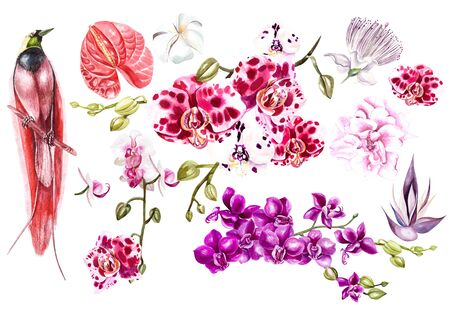 Set with watercolor tropical flowers. Orchids, plumeria  and tropical bird. Illustration