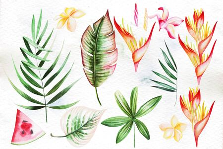 Watercolor set with tropical leaves, flowers. Illustration