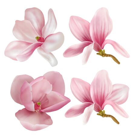 Collection of magnolia isolated on white background. Hand drawn graphic illustration. Reklamní fotografie