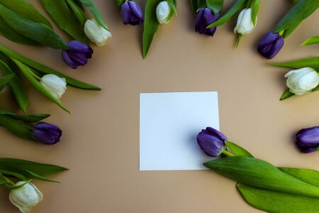 tulips, flowers of spring, Holidays flowers on colored background Banque d'images - 138555259