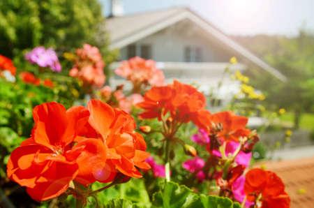 Balcony flowers in sunshine