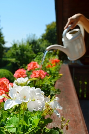 Balcony watering flowers Stock Photo