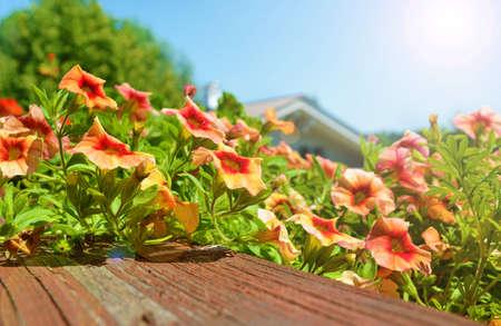 blumen: Balcony flowers in sunshine Stock Photo