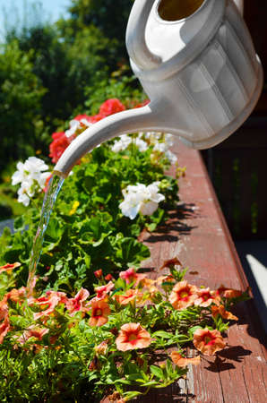 Balcony watering flowers Stock Photo - 15936551