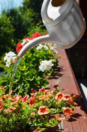 Balcony watering flowers