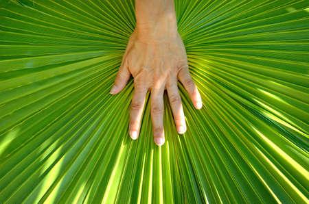Hand on a palm leaf