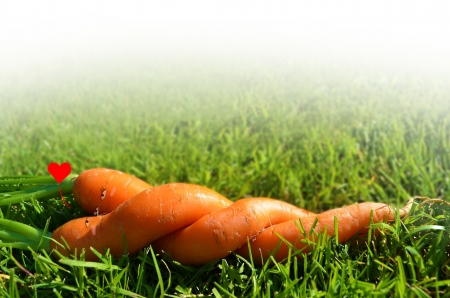 Carrots couple Stock Photo