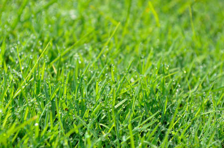 Water drops on grass Stock Photo