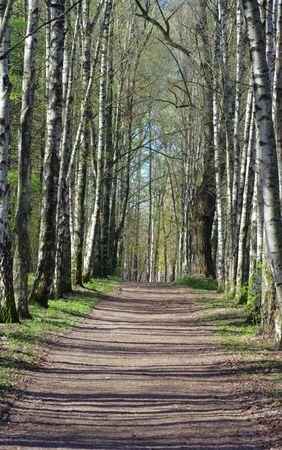 witchery: birch alley