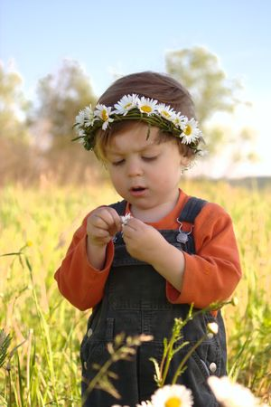 Little boy in the sunny field with daisy. Plucking daisy petals is a way to know who loves you.