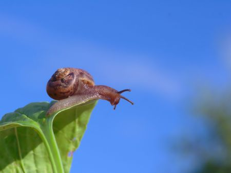 Snail on the edge of the leaf.