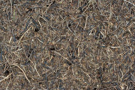 ameisenhaufen: Ameisenhaufen Hintergrund der Formica sp.