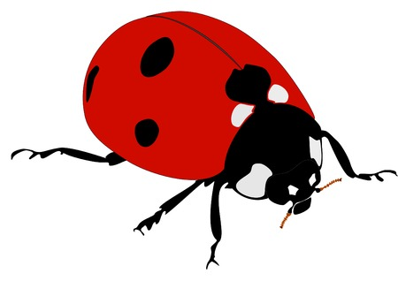 lady beetle: natural vector ladybug without gradients