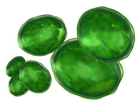 intracellular: 3d rendered set of plant organelle chloroplast isolated on white Stock Photo
