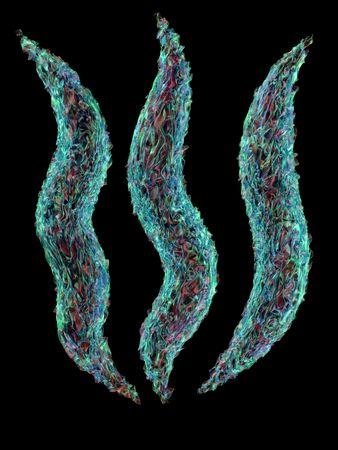 epidemiology: 3d rendered pathogen spirillum bacteria on black background Stock Photo