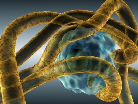 membrane cellulaire: Illustration du myc�lium fongique attaquer eucaryote cellule (humaine)