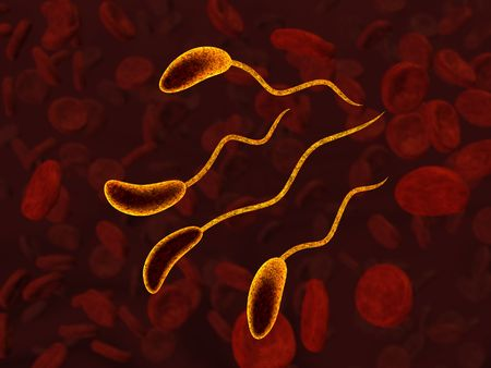 Bacteria cells in blood. Orientation of bacteria is optimized to be cropped by circle area.