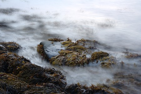 Stone with fucus on White Sea shore photo