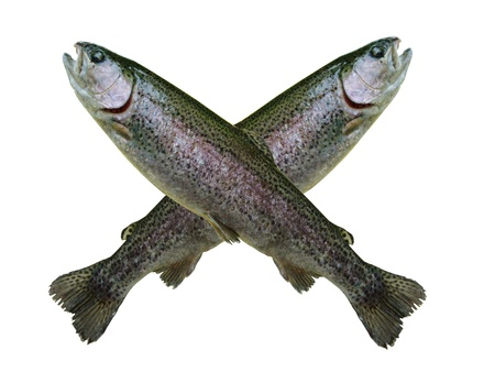 trout concept isolated on white photo